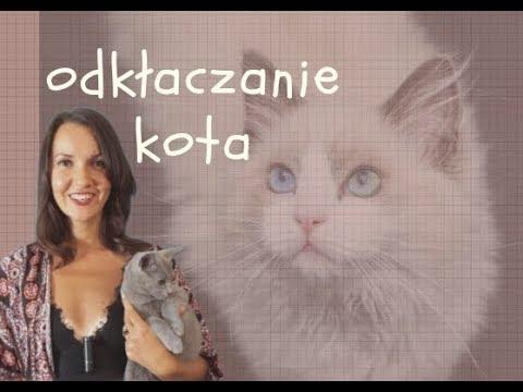 Giardia choroba u kota, Wilson-Konovalovova chorobasymptómy, príčiny, liečivé.