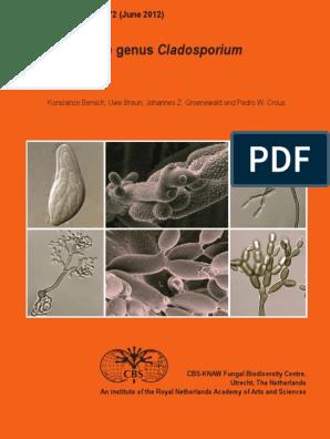 Helminthosporium echinulatum,