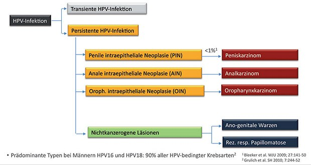 hpv impfung zeitpunkt