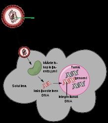 hpv onkogén definíció