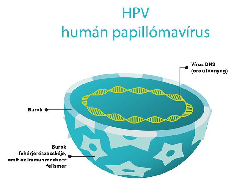 hpv vírus ürítése