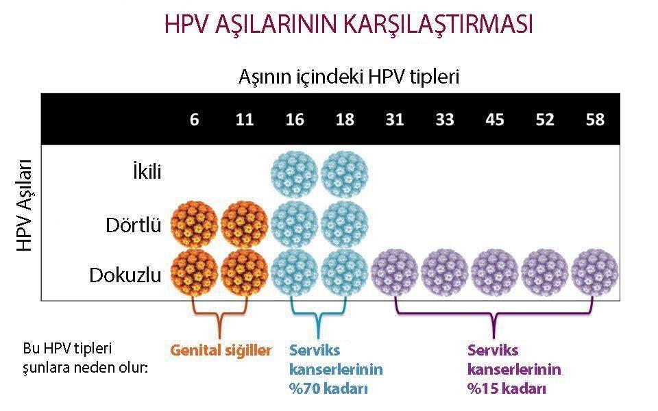 humán papillomavírus asisi nedir)