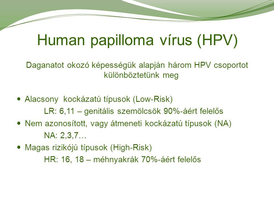 humán papillomavírus hpv magas kockázatú típusok)