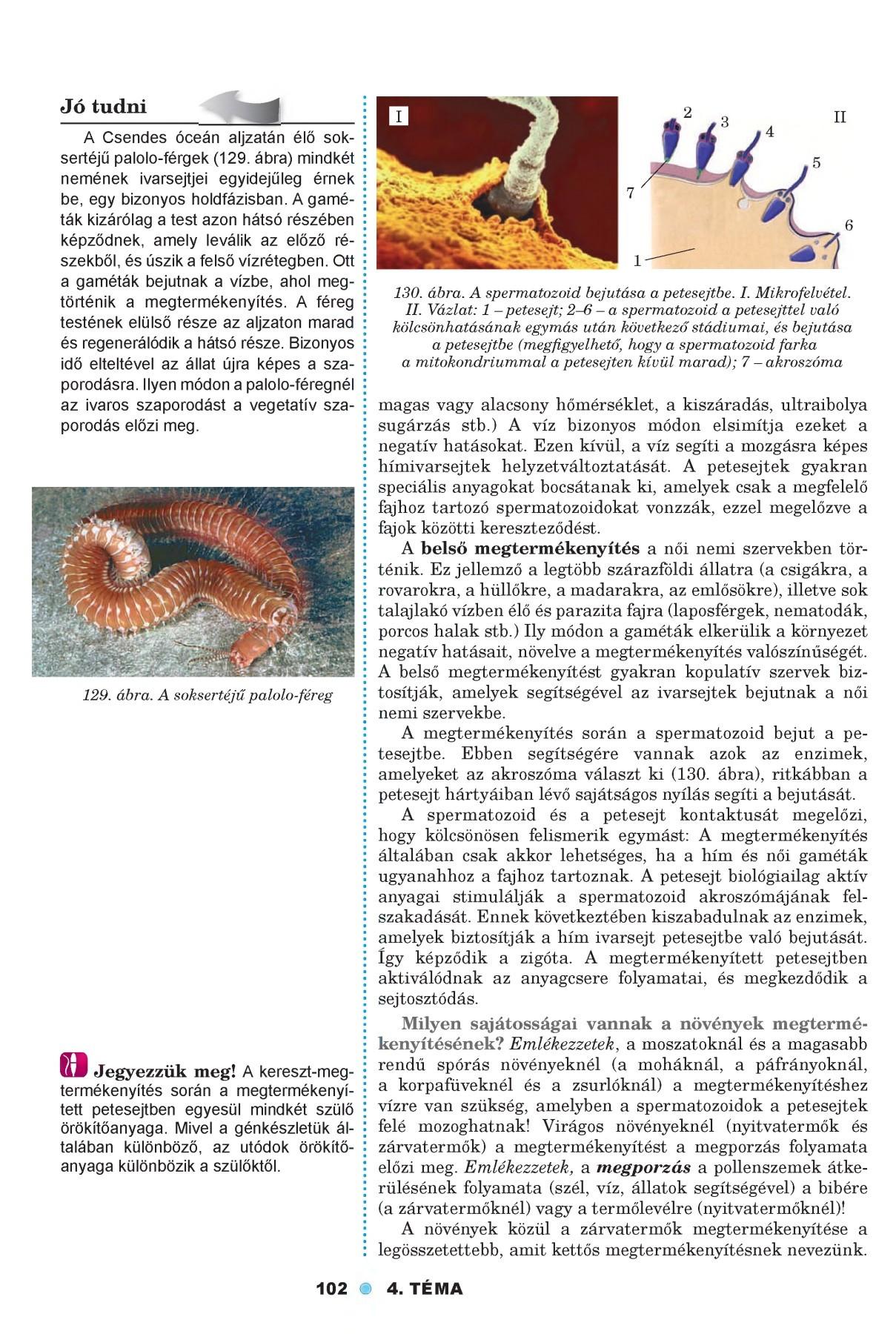 Platyhelminthes trematoda fajok
