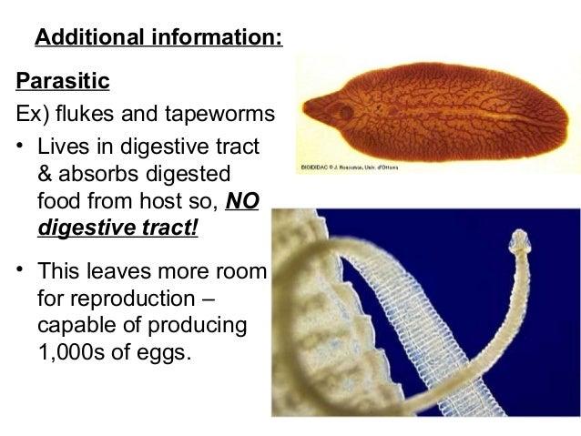 Málya platyhelminthes. Málya- platyhelminthes, Parazita széles streamer tünetei