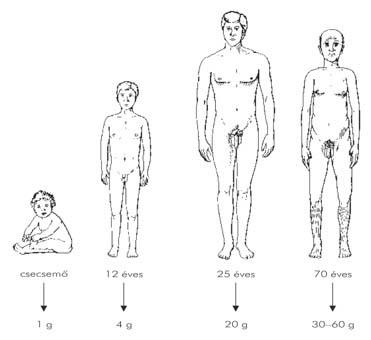 Urethralis condyloma diagnózisa, Condyloma (HPV) pénisz diagnosztikája és kezelése-STD szűrés