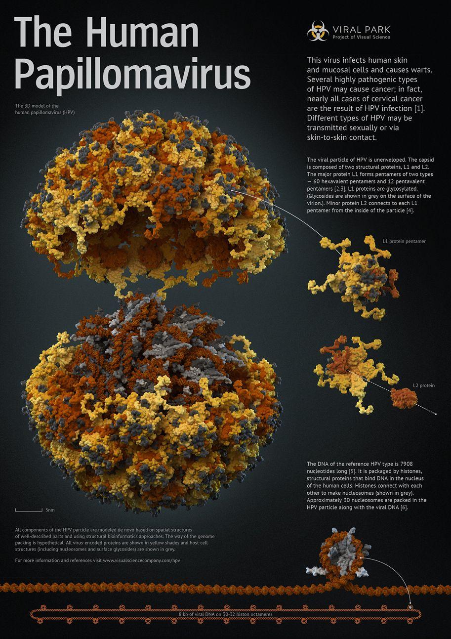 súlyos papillomavírus vagy sem)