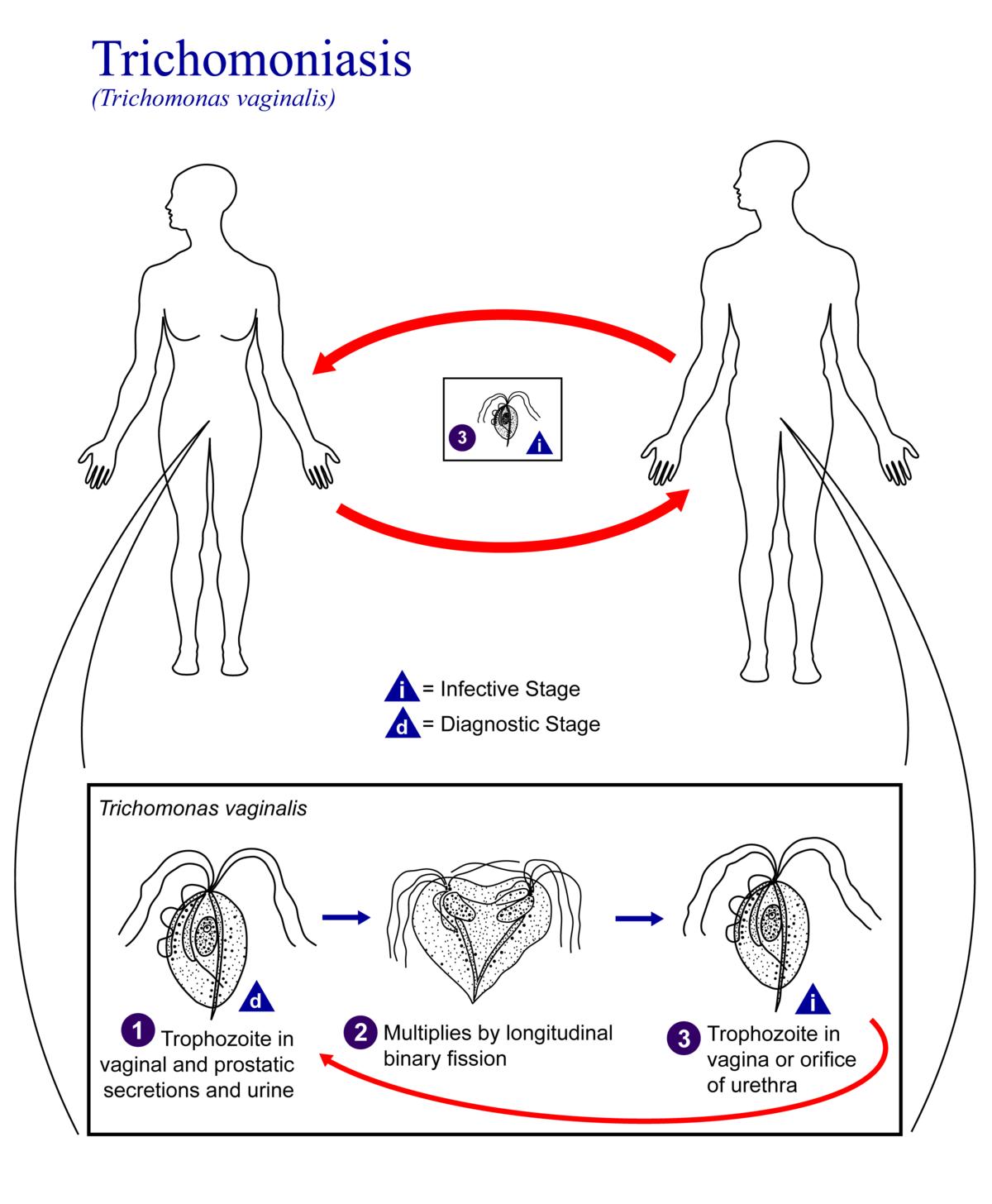 Condylomas nőkben - mi ez és hogyan kell kezelni