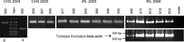 Immunitás stimulálása papillomavírussal