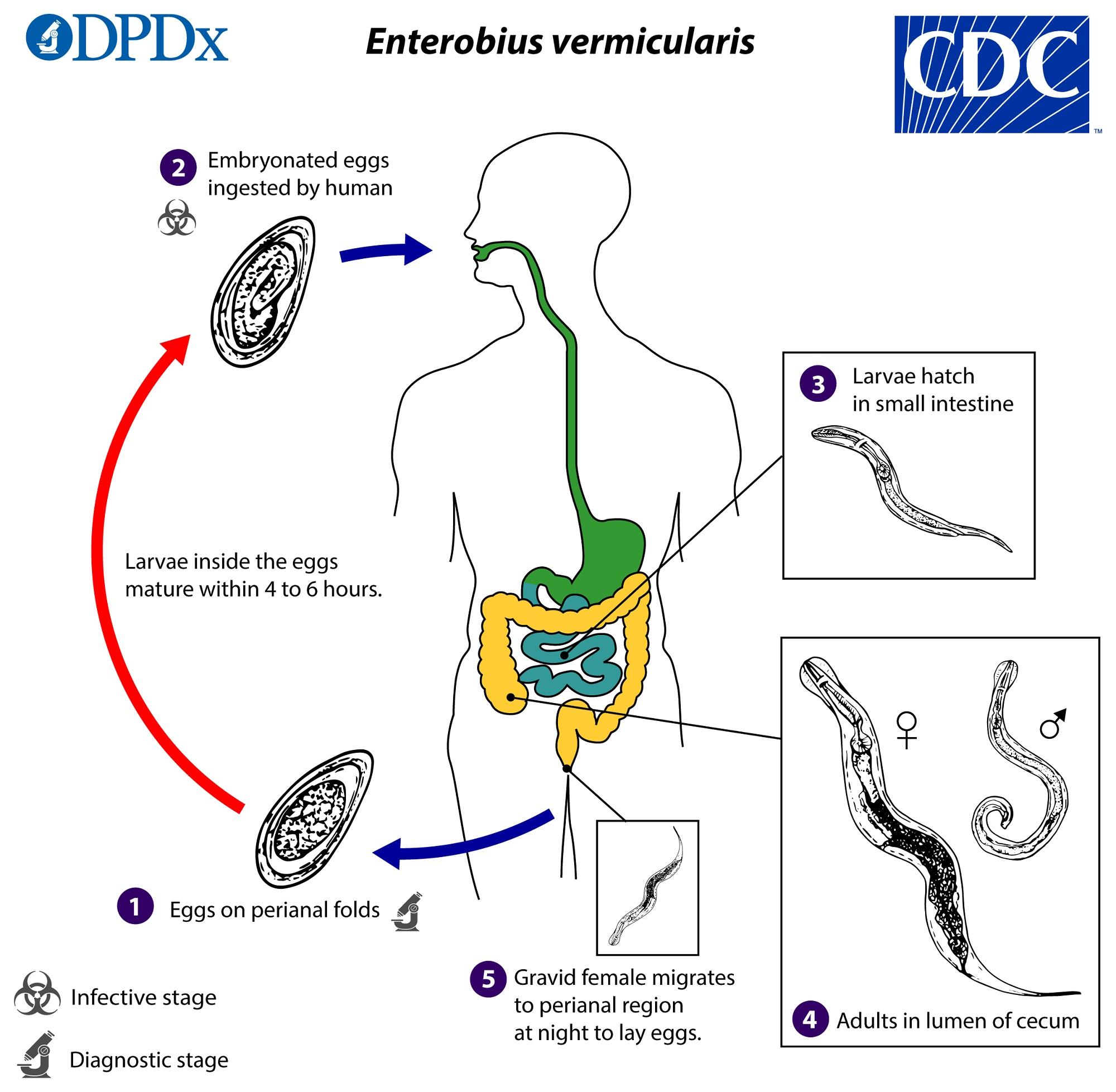emberi papillomavírus fertőzés nők egészsége